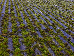 Bølgeeternittag fyldt med grøn mos